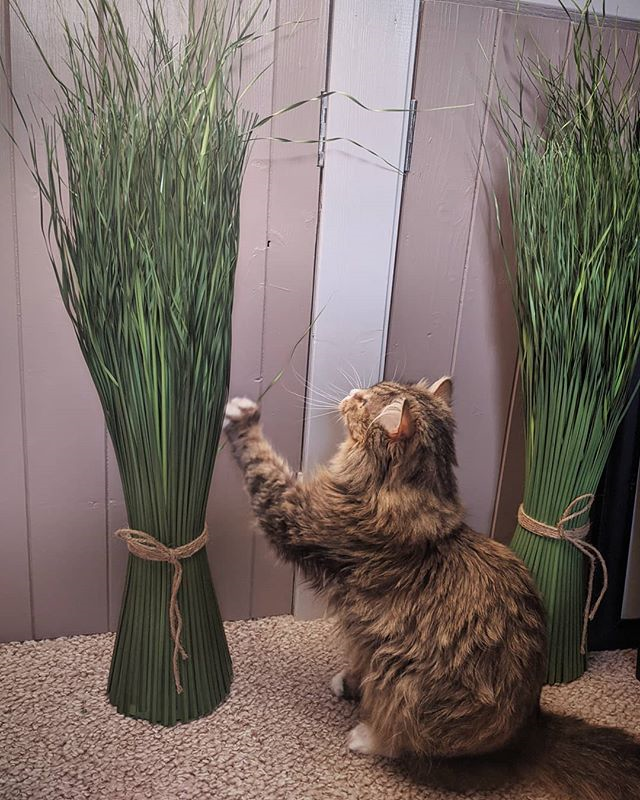 George Michael the cat, playing with a plant